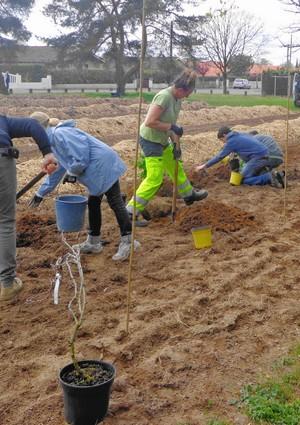 image : verger participatif - Mont de Marsan