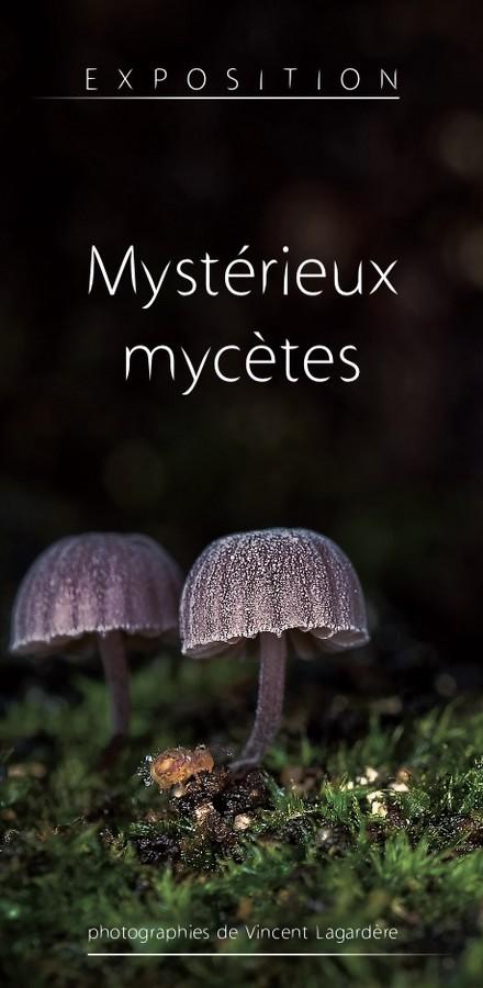 image :Champignons - expos Mystèrieux mycètes - vincent Lagardère - Musée Despiaux Wlérick